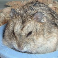 Which hamster is good to Keep Winter White or Roborovski?
