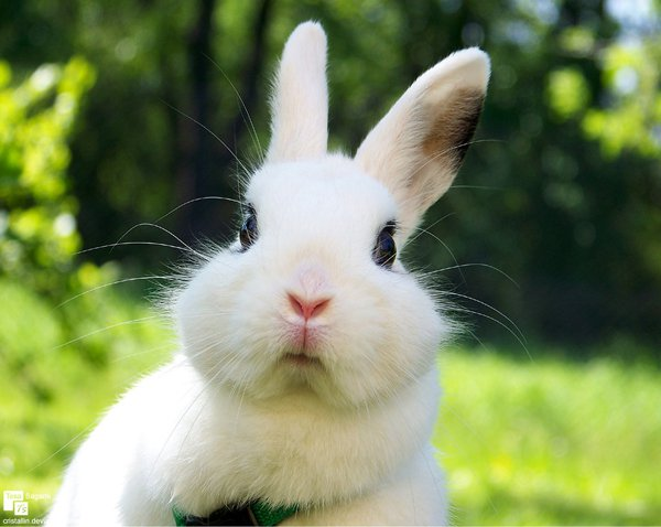 Basic First Aid to Treat Sick Rabbits