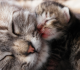 Your Cat Giving Birth and You are Alone at Home? Here are 3 Ways to Help