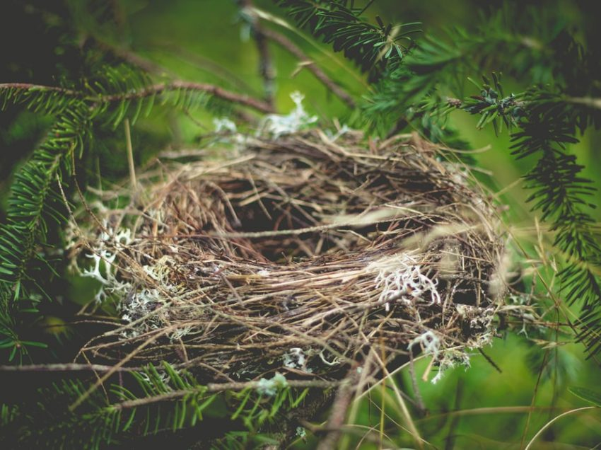 Birds And Their Nest Making Process; Steps, Speed, Materials