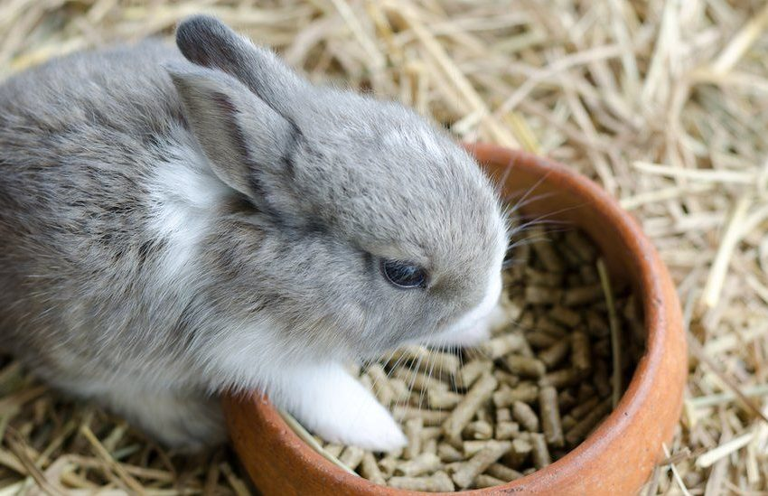 How to Overcome the Poison on Rabbit?