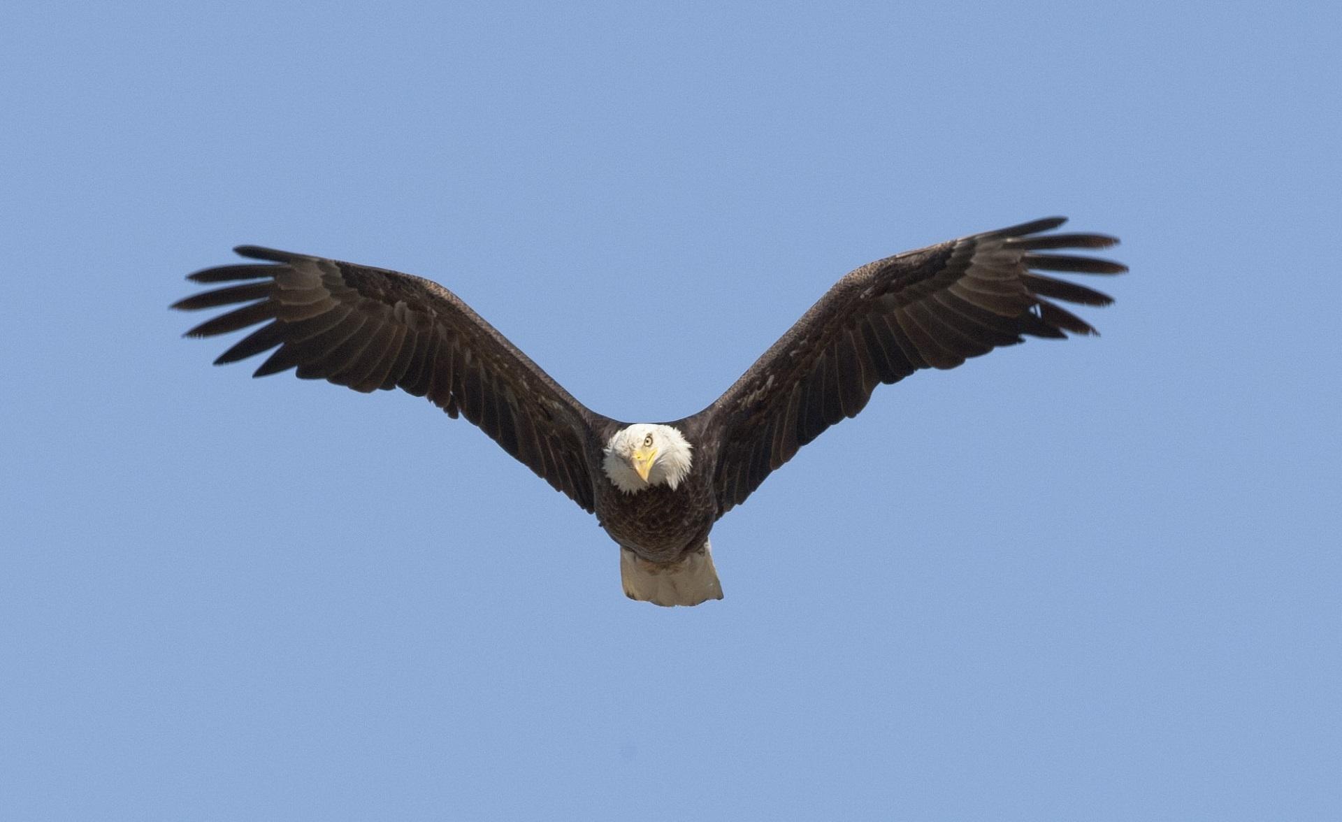 Eagle Pose