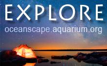Oceanscape Network Explore
