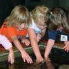 Young Aquarium visitors experience the ocean at their fingertips in our Touch Pool.