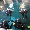 Guest SCUBA divers prepare to enter the shark habitat in Open Seas.