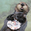 Otter with ice treat