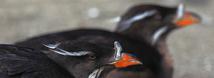 Seabird Aviary