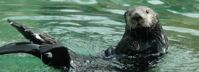 Aquatots: Outrageous Otters