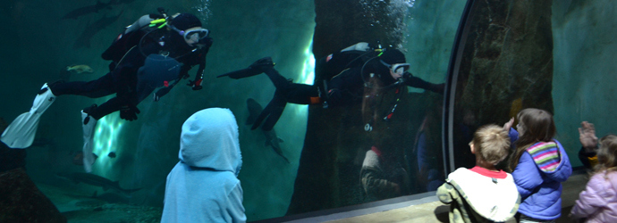 Oregon Coast Aquarium Held Diving Demo Tour and Rally, Received Award