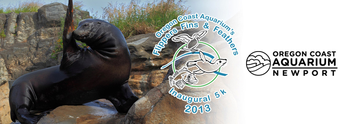 Run Yaquina Bay for the Oregon Coast Aquarium's Flippers, Fins and Feathers 5k