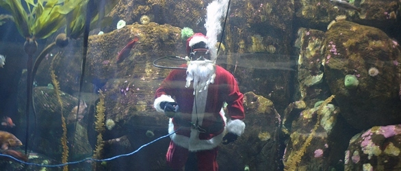 Oregon Coast Aquarium Spreads Holiday Cheer Above and Under the Sea