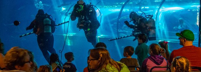 Volunteer at the Aquarium