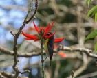 foto-de-aves-arautos-do-evangelho-divina-providencia-flor-vermelha