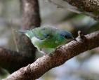 foto-de-aves-arautos-do-evangelho-divina-providencia-serra-cantareira