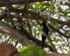 foto-de-aves-arautos-do-evangelho-divina-providencia