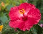 foto-de-flor-arautos-do-evangelho-divina-providencia-fotos-da-natureza-4