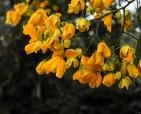 foto-de-flor-arautos-do-evangelho-divina-providencia-fotos-da-natureza-5