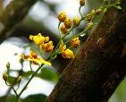 foto-de-flor-arautos-do-evangelho-divina-providencia-fotos-da-natureza-6