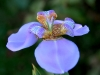 flores serra da cantareira_ecologia