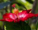 flores-ensdp-serra-da-cantareira