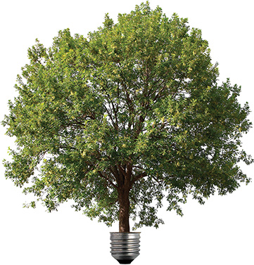 lightbulb tree, enviromentally conscious recycling green energy