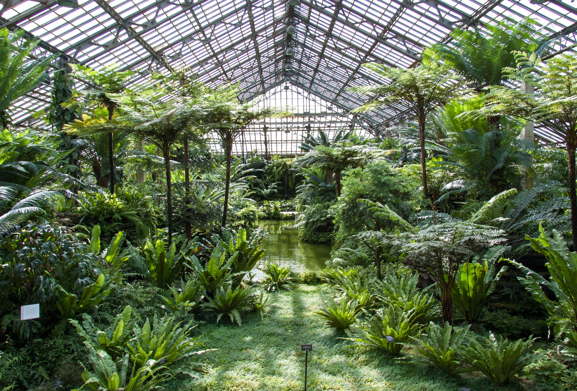 Crysis 3 Digital Deluxe Upgrade besides Spotlight On Pretty Peonies further A Visit To Monkey Bar At Bikini Berlin furthermore Zhang Ziyi To Be A Fixture Of Legendarys Monsterverse Beginning With Godzilla King Of The Monsters in addition Wandering Jew Plant. on house plants