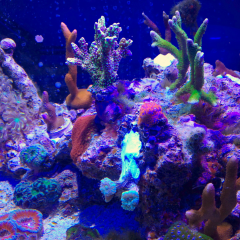 Star Montipora And Surroundings