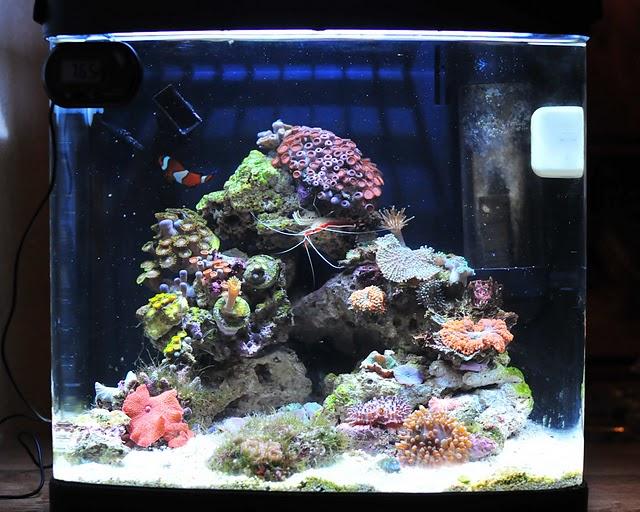 Sold 8 Gallon Oceanic Biocube W Current Usa Sunpod 70w