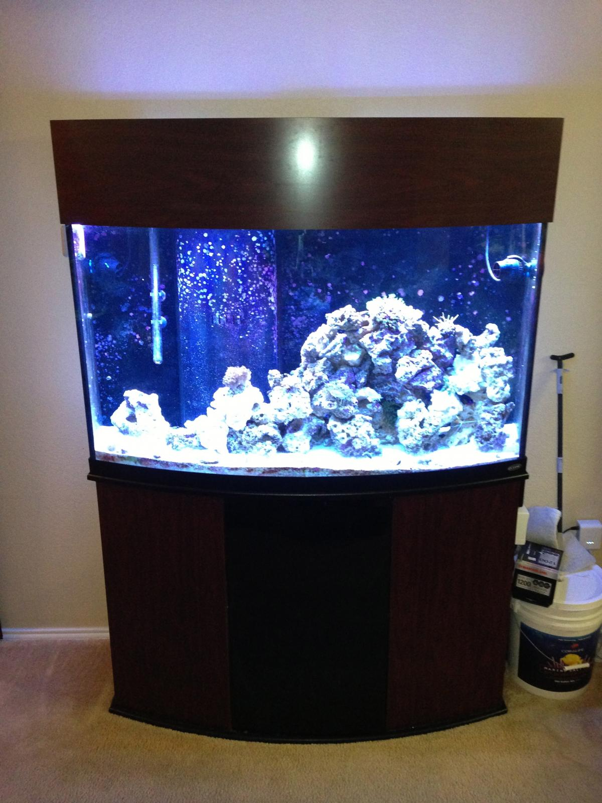 post-2485-0-90875900-1366083799_thumb.jp & 90 Gallon Oceanic Bow Front Reef $500.00 - Complete Systems ...