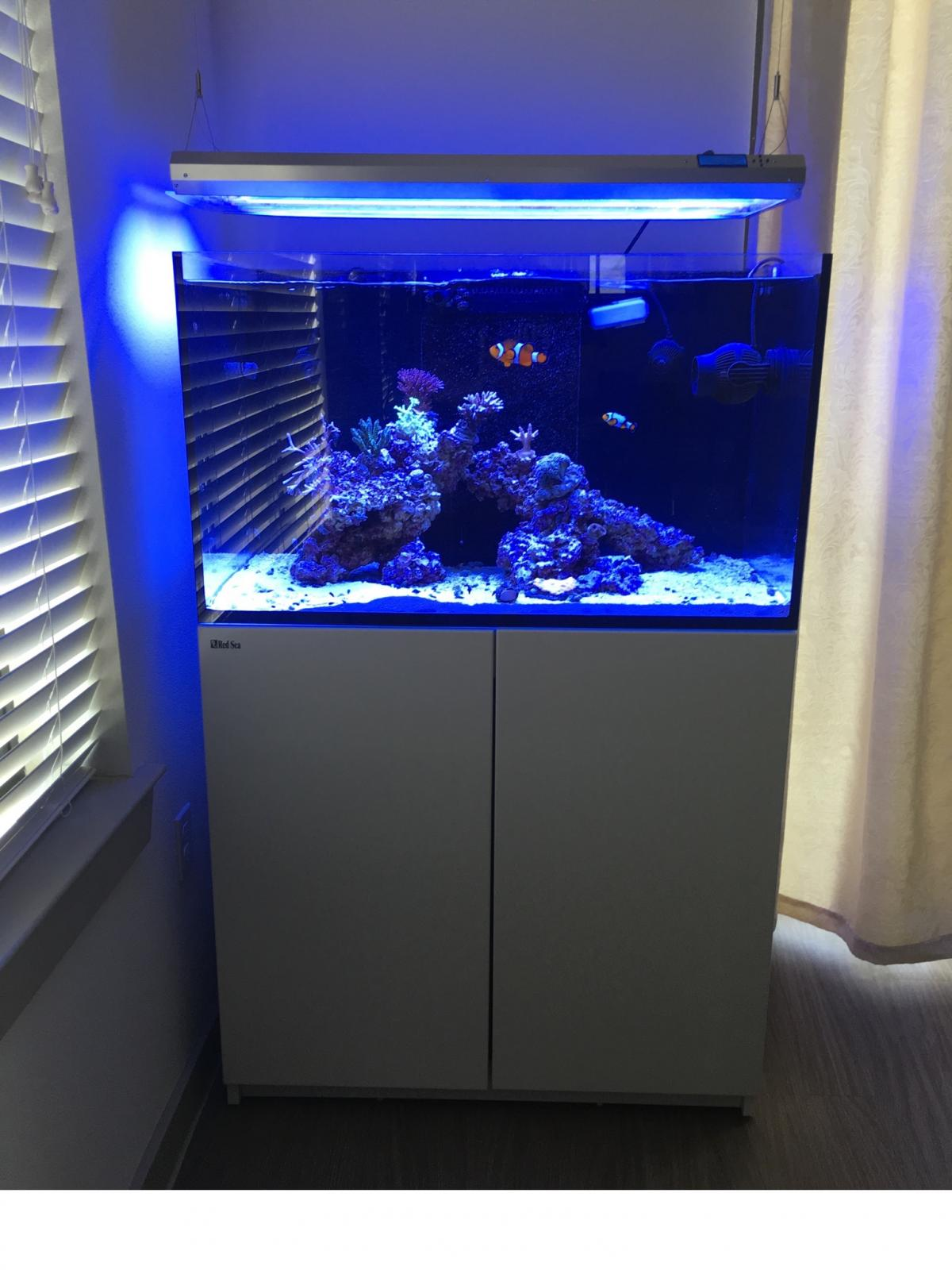 Red Sea Reefer 250 Full Setup Complete Systems Austin