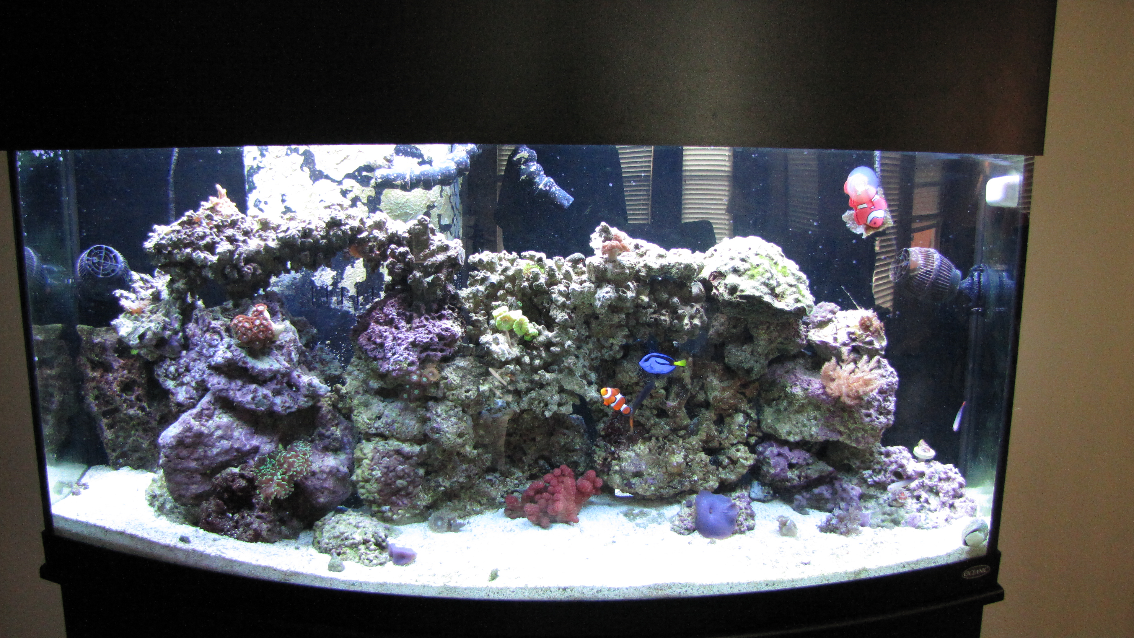 My 72 gal bowfront reef tank reef keeping austin reef club for 37 gallon fish tank