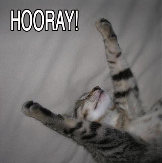 Happy Cat saying Hooray!