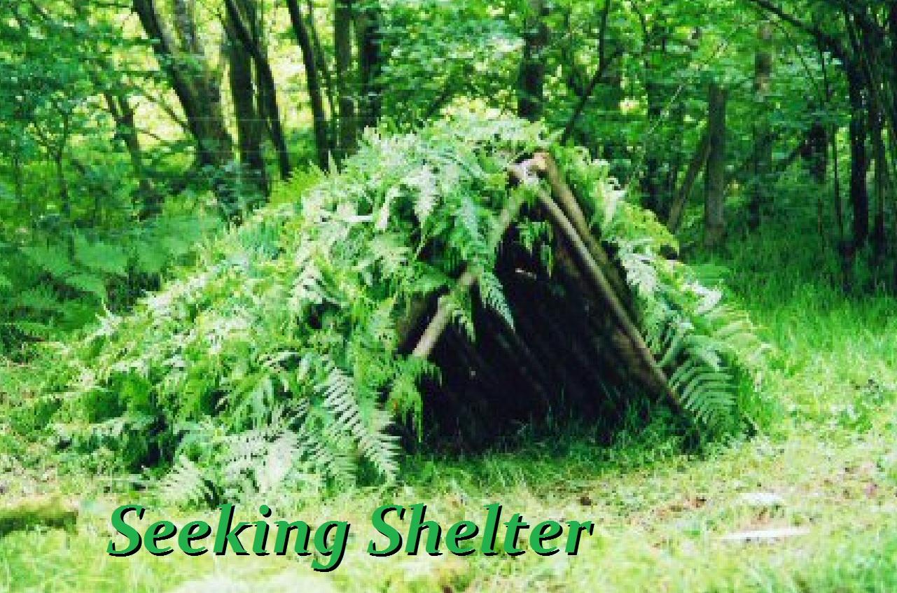 Как детям построить шалаш в лесу