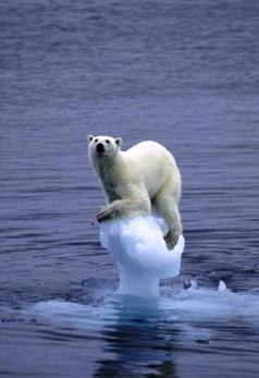 Bear-Ice