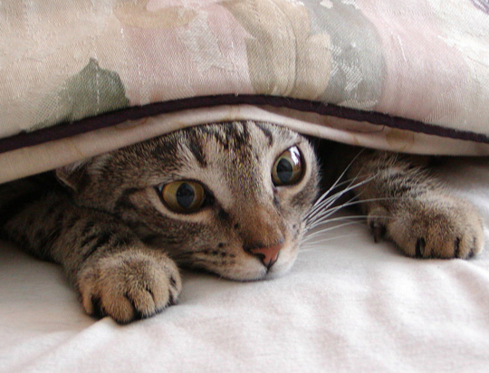 Hiding-Under-Covers