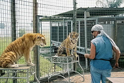 Training Wild Lions