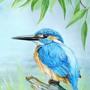 Kingfisher_card