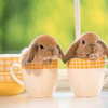 Bunny-cups_thumb