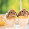 Bunny-cups_thumb