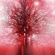 Large_arteries_and_trees_card