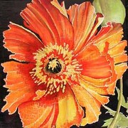 Frilly_orange_poppy039040_card