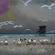 Birdsonthe_beach__small_card