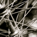 Spokes_square