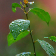 Leaves_after_rain_card