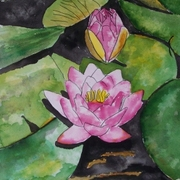 Water_lily_flower_small_card
