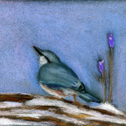 Nuthatch_card