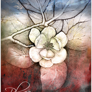 Blossom_by_lovelycristina_card