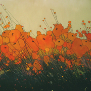 Orangepoppies1_card