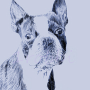 Boston_terrier_no_smile_etsy_copyright_card
