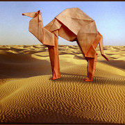 Papercamel_card